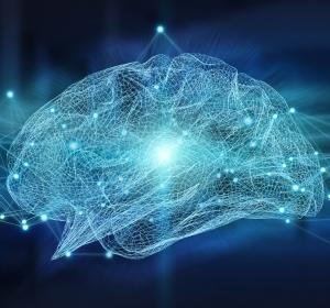 Neuronale Netzwerke: Zellmigration fördert spontane Aktivität