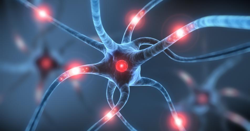Alzheimer: Beta-Amyloid-Fibrillen aus menschlichem Gehirn isoliert