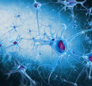Wie das Gehirn Verhalten organisiert