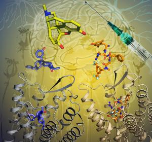 Aufklärung der Aktivierung von Opioid-Rezeptoren eröffnet Weg zur Entwicklung selektiver Wirkstoffe