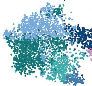 Verschiedenste Erscheinungsformen von Immunzellen im menschlichen Gehirn erstmalig identifiziert
