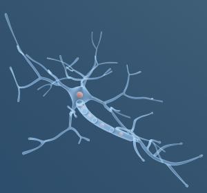Rückenmarksverletzung: Stammzelltherapie zur Verbesserung der motorischen und Sinnesfunktion