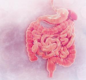 Darmmotilität: Bedeutung des Arylkohlenwasserstoffrezeptors AhR