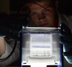 Epigenetik: Muster der Vererbung