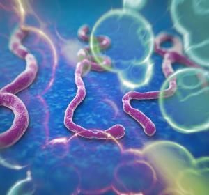 Ebola: Neue Virusvarianten schneller erkennen