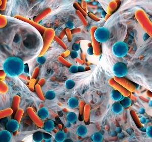 Sepsis: Personalisierte Immuntherapie
