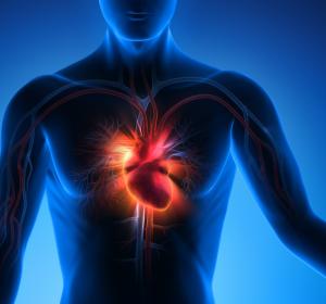 Herzmuskel: Bioverträglicher Gewebekleber in Testung