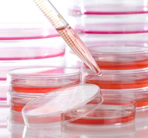 Coronavirus: BMBF startet Förderaufruf zur Entwicklung neuer Medikamente