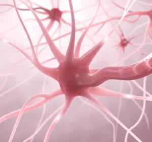 MS: Signifikante Reduktion der Krankheitsaktivität unter BTK-Inhibitor in Phase-IIb-Studie