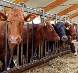 Bundestag nimmt Viren-Übertragung von Tier auf Mensch in den Blick
