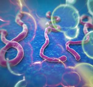 Ebola: CHMP-Empfehlung für Impfstoff