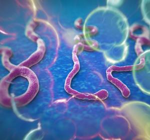 Zulassung von Ebola-Impfstoff