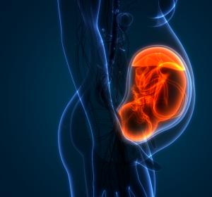Angeborener Herzfehler führt bereits intrauterin zu Veränderungen des Gehirns