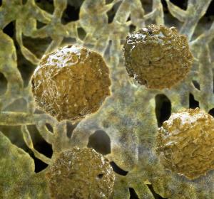 Adenovirus-Infektion nach Stammzelltransplantation: Arsentrioxid stärkt körpereigene Abwehr