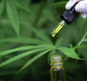 Deutsche Gesellschaft für Schmerzmedizin will Verordnung von Cannabinoiden erleichtern