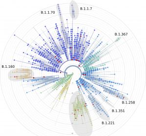 SARS-CoV-2-Mutation: Engmaschige molekulargenetische Überwachung des Infektionsgeschehens