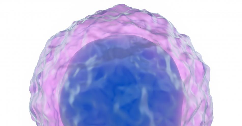 RANK-Protein-Aktivierung+mitverantwortlich+f%C3%BCr+die+Entartung+von+B-Zellen