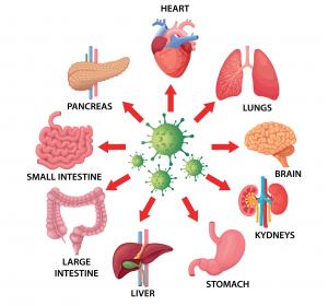 Studie: SARS-CoV-2 infiziert auch die Beta-Zellen der Bauchspeicheldrüse