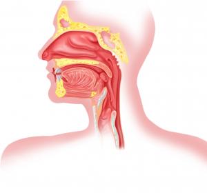 Dysphagie: Neue neurologische Klassifikation