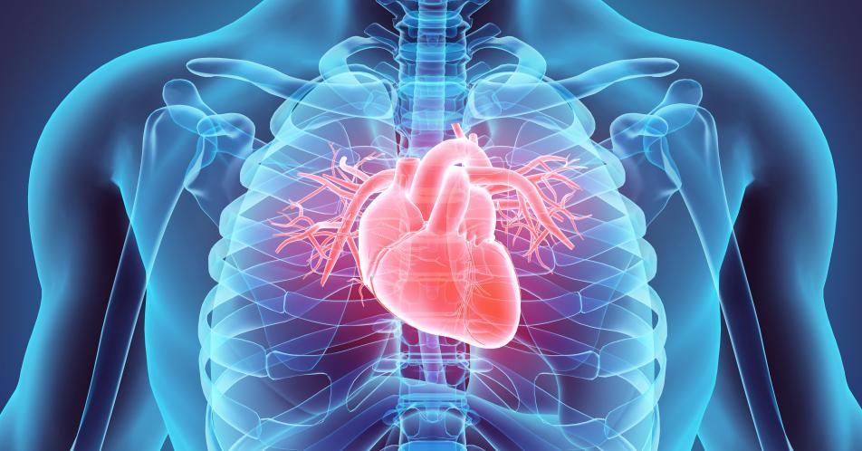 Hohes+Erkrankungsrisiko+von+jungen+Erwachsenen+mit+angeborenem+Herzfehler