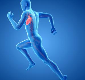 Interdisziplinäre Zusammenarbeit von Kardiologie und Sportwissenschaften
