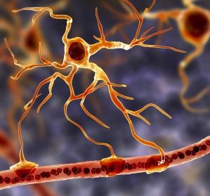 Alzheimerprotein APP reguliert Lernen und Sozialverhalten im gesunden Gehirn