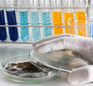 DFG: Sonderforschungsbereich zu lebensbedrohlichen Pilzinfektionen
