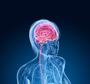 Lithiumverteilung im Gehirn – Ursache für Depressionen?