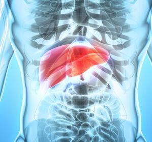 Von der Fettleber zur Leberfibrose – Forscher entdecken Ursache