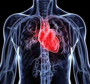 Chronische Herzinsuffizienz: Vericiguat erhält EU-Zulassung