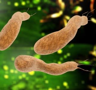 Auf einen Blick: Helicobacter-Infektion