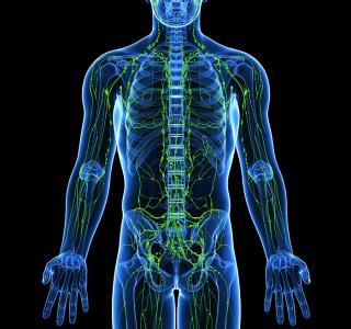 Lymphknoten–Transplantation: Hilfe bei Lymphödemen