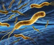 Helicobacter ist immer noch verbreitet