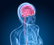 Gesundheitsratgeber Multiple Sklerose