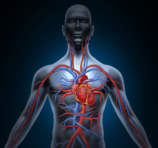 Krebstherapien können Herz und Gefäße schädigen: Wie schützt man Patienten?