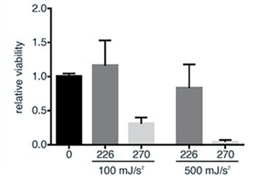 Abbildung 5: Die Rate der lebenden Zellen nach UVC-Lichteinwirkung